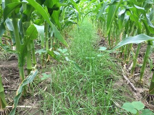 cover crop image 2017 2